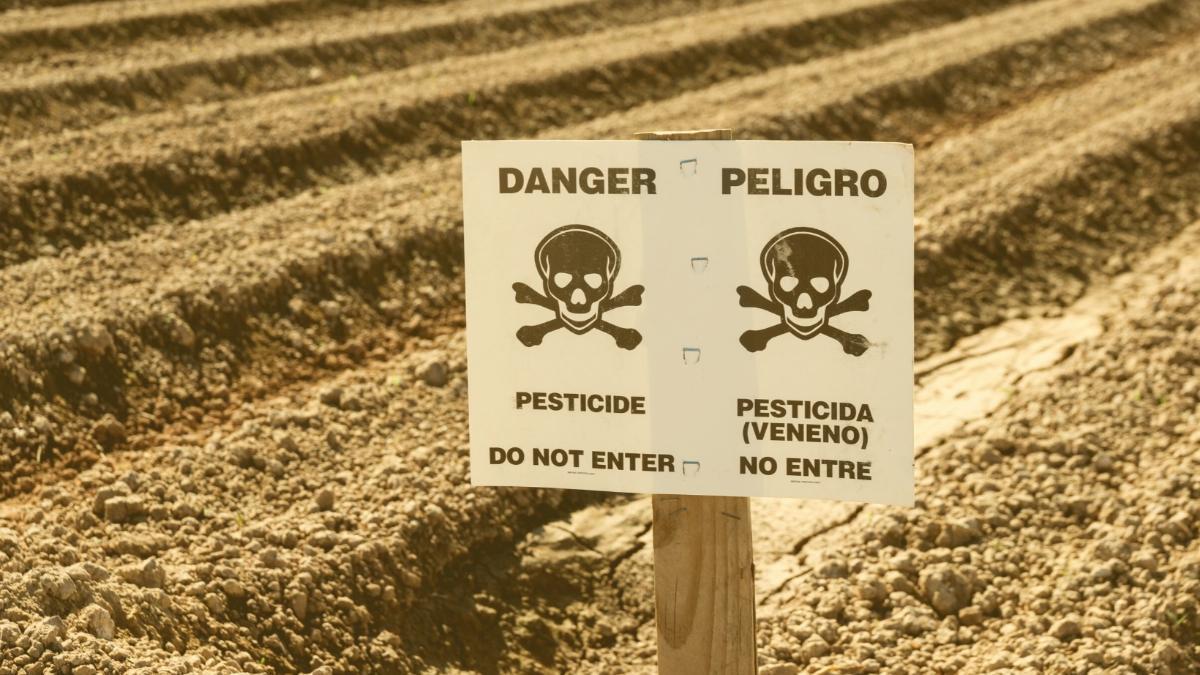 Krebserzeugende Pestizide: Alle Lebensmittel-Warnungen von 5. bis 12.9.2021