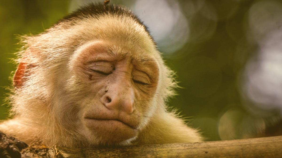 Vom Aussterben bedroht: Diese Tierarten stehen jetzt neu auf der Roten Liste