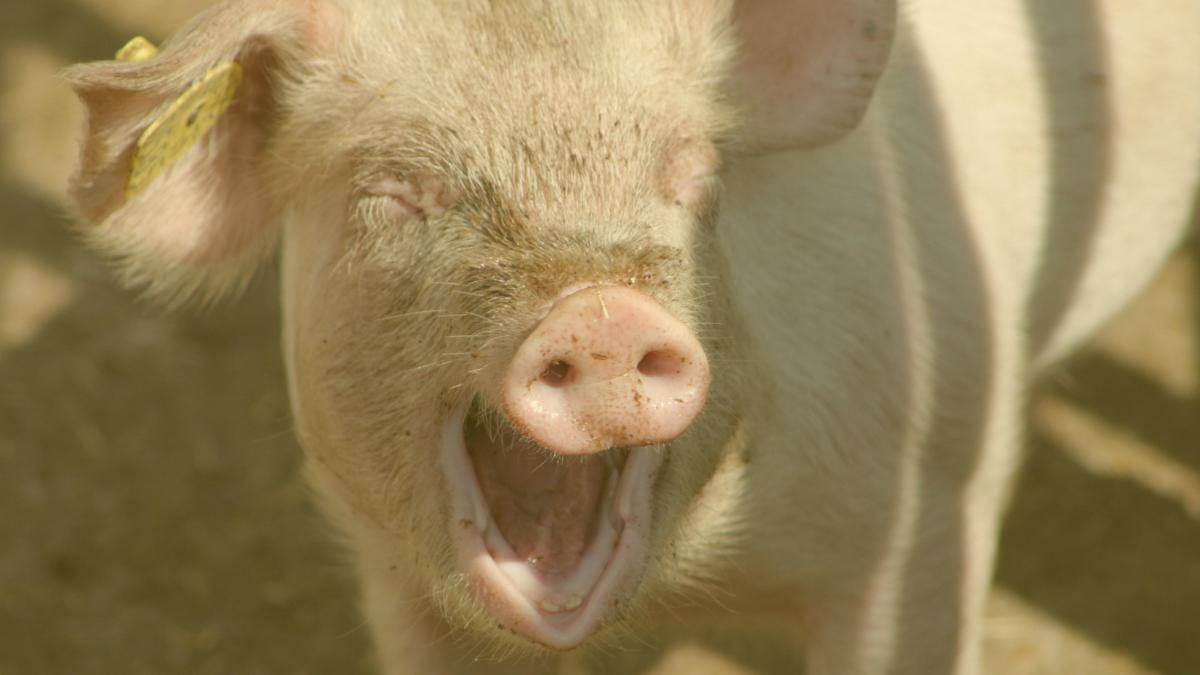 Das Volk begehrt: Eine Zukunft ohne Tierleid & Naturzerstörung