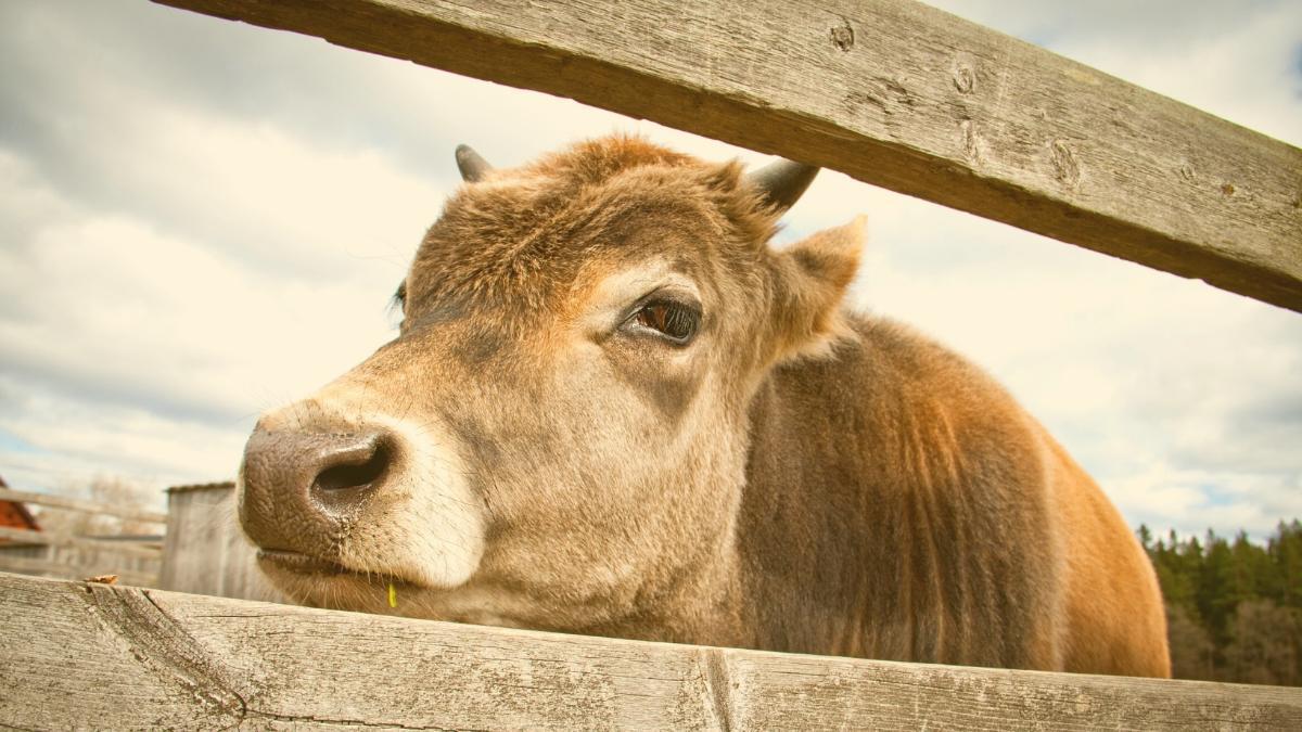 Exklusiv: So geht's jetzt mit dem Tierschutzvolksbegehren weiter