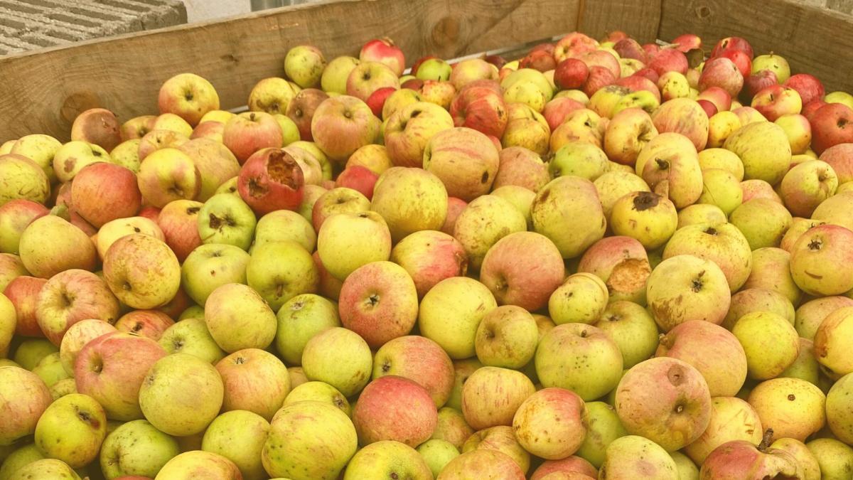 Obstbauer gibt Einblick: Von Saft aus Streuobst und Konzentrat aus China