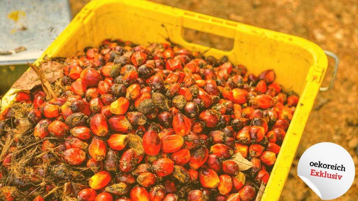 Diese Alnatura-Produkte enthalten Palmöl: Nicht sehr sinnvoll für Mensch & Erde