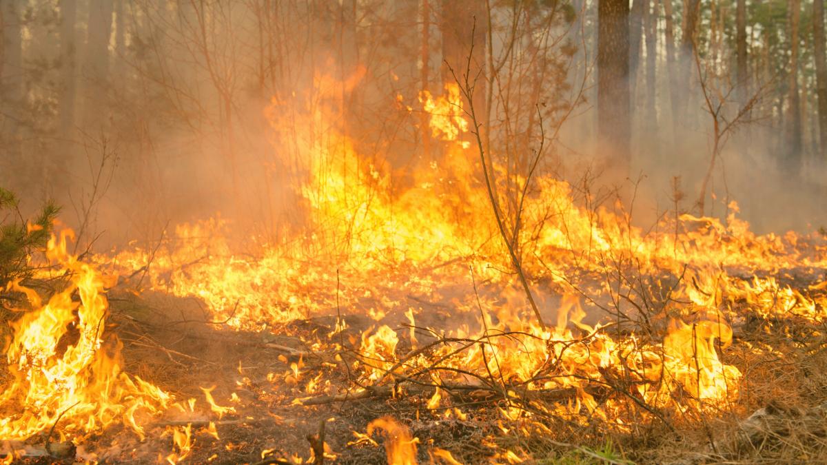 Waldbrände führen jetzt zur Tragödie: 42 Tote, darunter 25 Rettungskräfte
