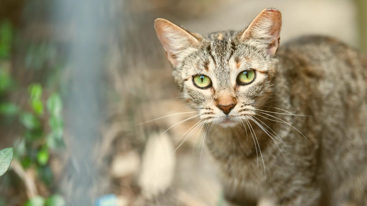 Arme Streunerkatzen: So helfen wir konkret Tierleid zu verringern