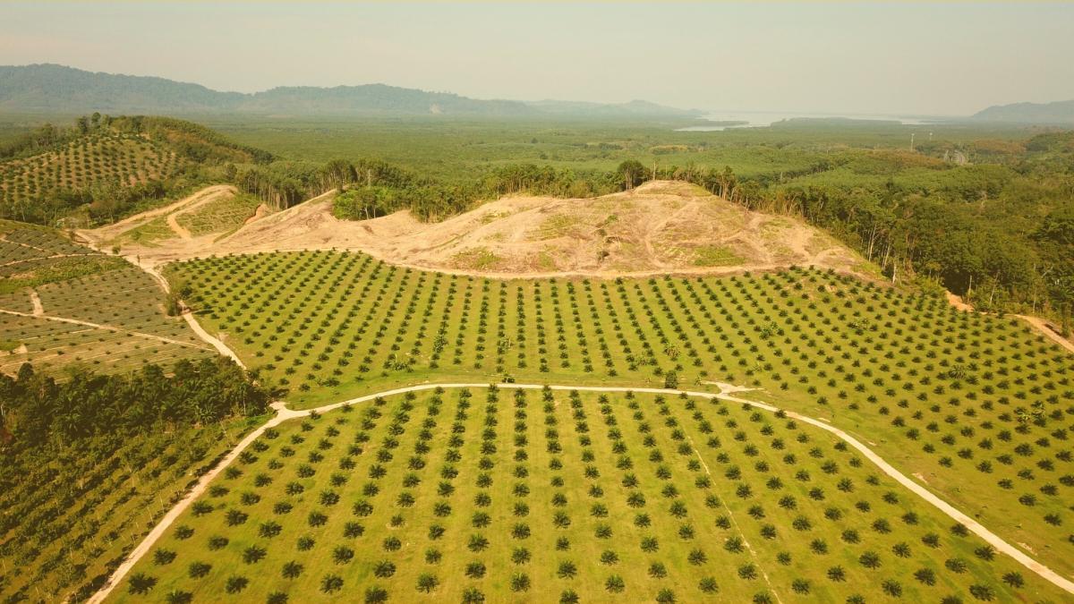 Report zeigt Zerstörung: Importverbot für Soja & Palmöl aus Regenwald gefordert