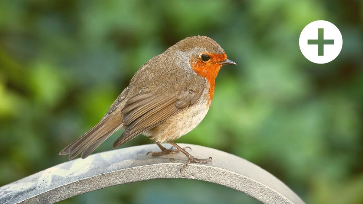 """""""Insekten & Singvögel finden immer weniger ökologische Nischen in der Stadt"""""""