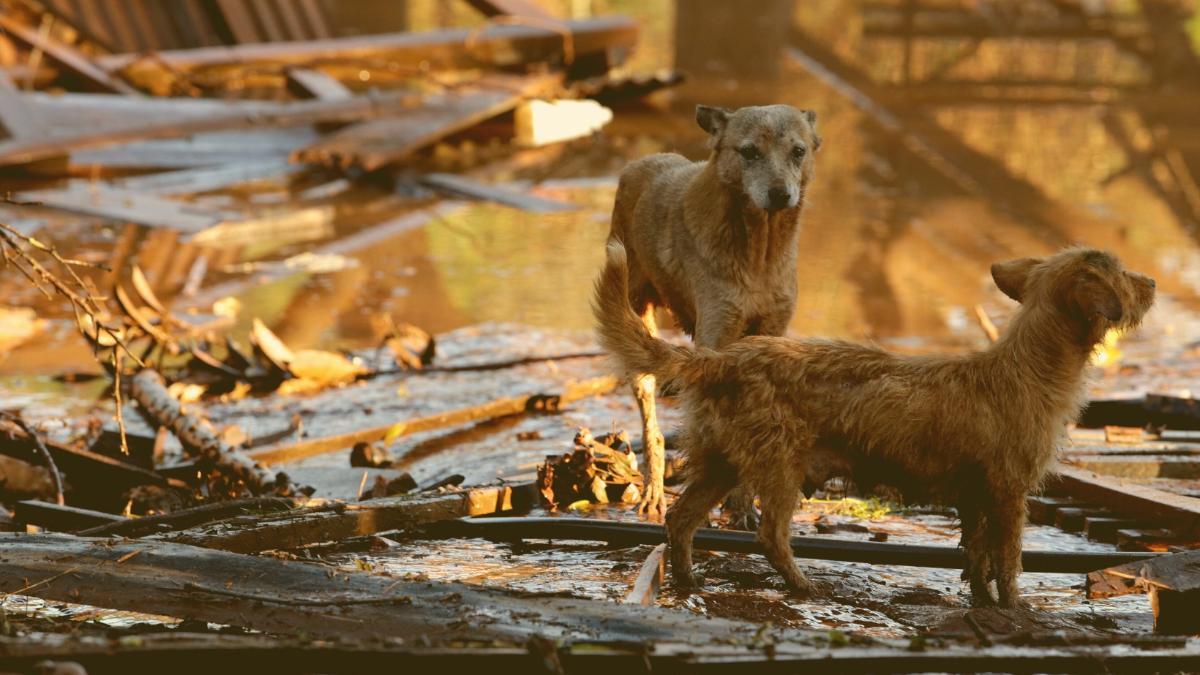 Nicht vergessen: Auch tausende Tiere sind im Hochwasser gestorben