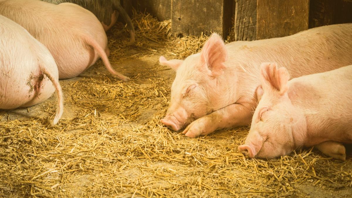Tierschutz bleibt ein Volksbegehren: Wir mischen uns weiter zum Wohl der Tiere ein!