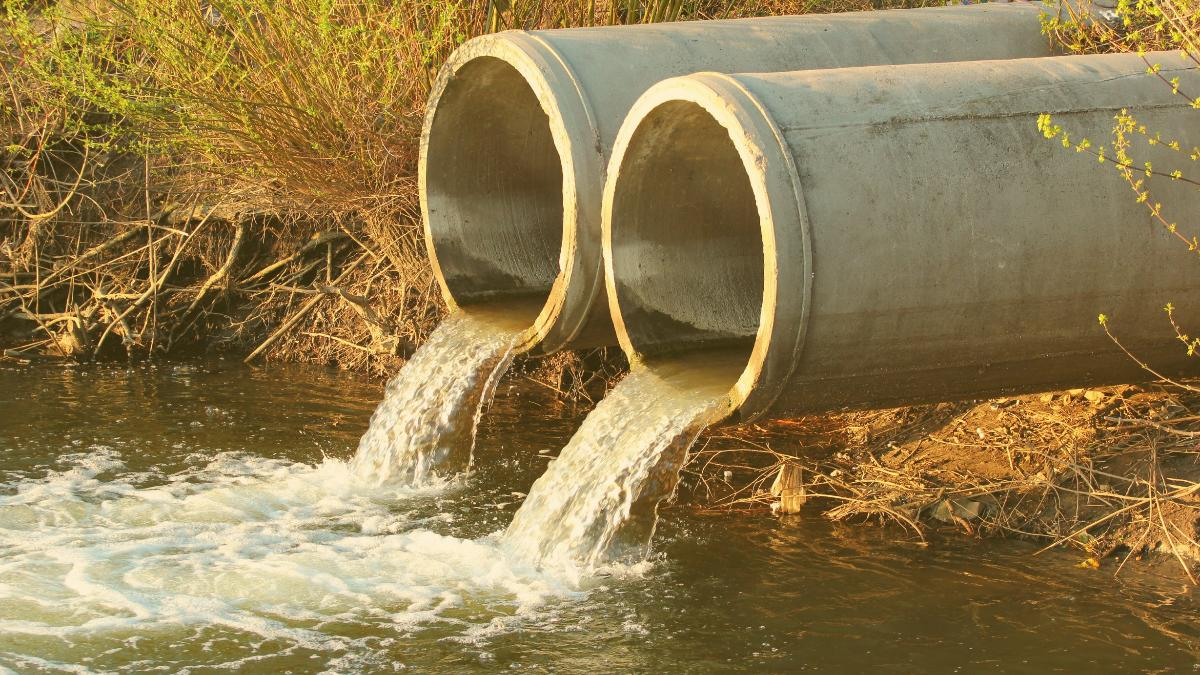 Skandal: Verseuchtes Schlachtfabrik-Abwasser gelangt ungefiltert in Natur