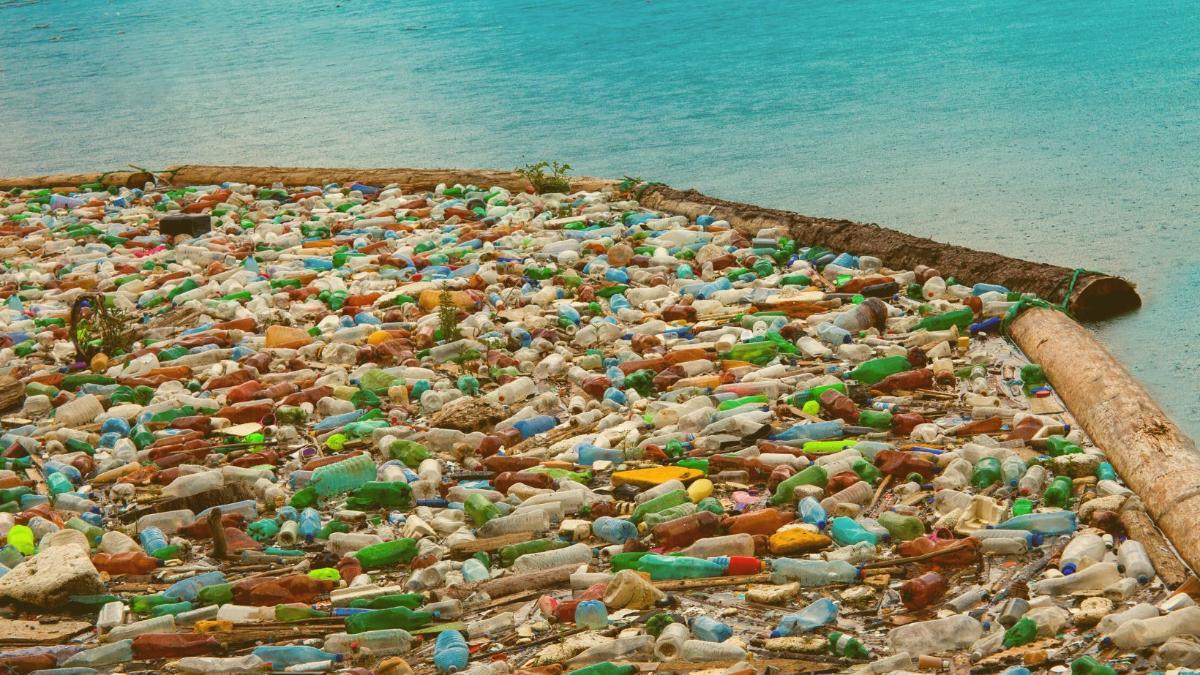 Forscher fordern drastische Reduktion des Plastikmülls in der Umwelt