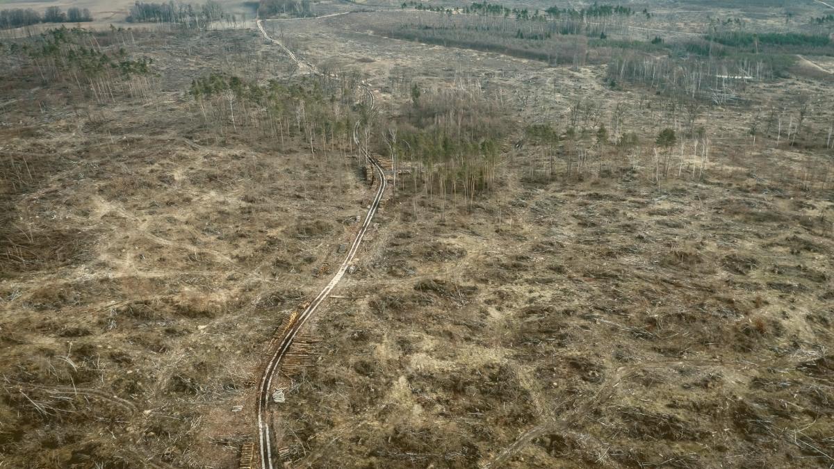 Hunderte Morde: Konzerne gehen brutal gegen Indigene & Umweltaktivisten vor