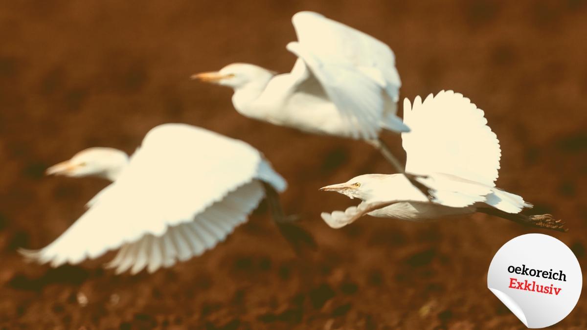 Wie der Klimawandel die Lebensräume der Vögel verändert