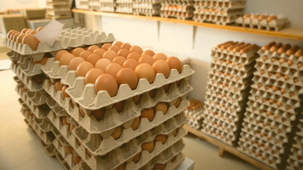 oekoreich wirkt: Penny nimmt Import-Eier nach Protest aus dem Regal