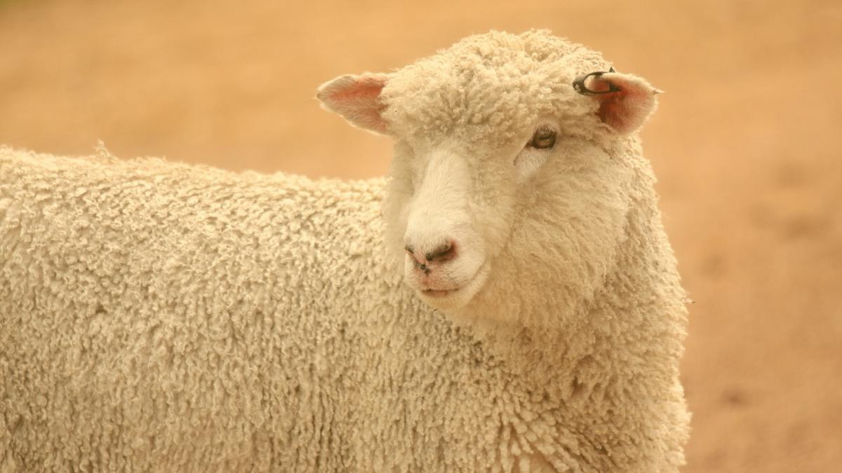 """Kosmetika, Textilien & Co: """"Tierleid wäre nicht notwendig, es ist schlicht billiger"""""""