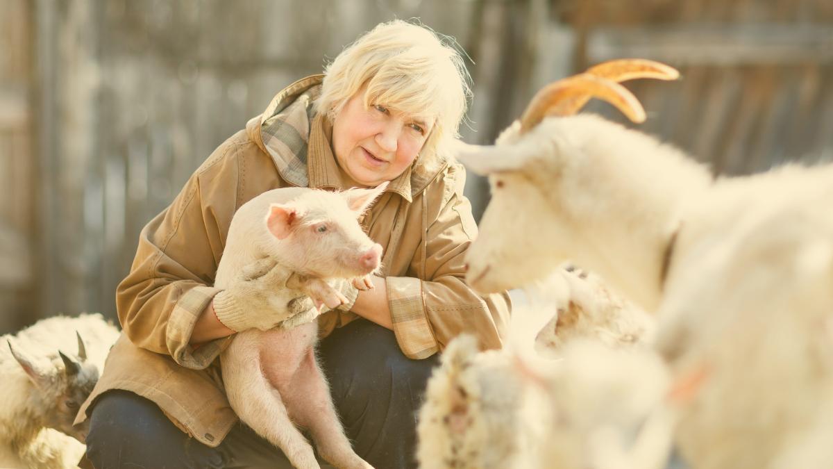 Nachsehen: Arme Sau – Schweine & Bauern unter Druck