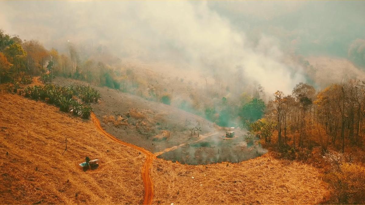 Bankrotterklärung: Auch 2030 soll Gen-Soja aus Regenwald importiert werden