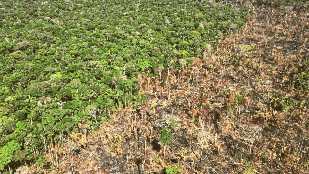 Regenwald-Rodungen: So groß ist die Fläche, die im letzten Jahr verloren gegangen ist
