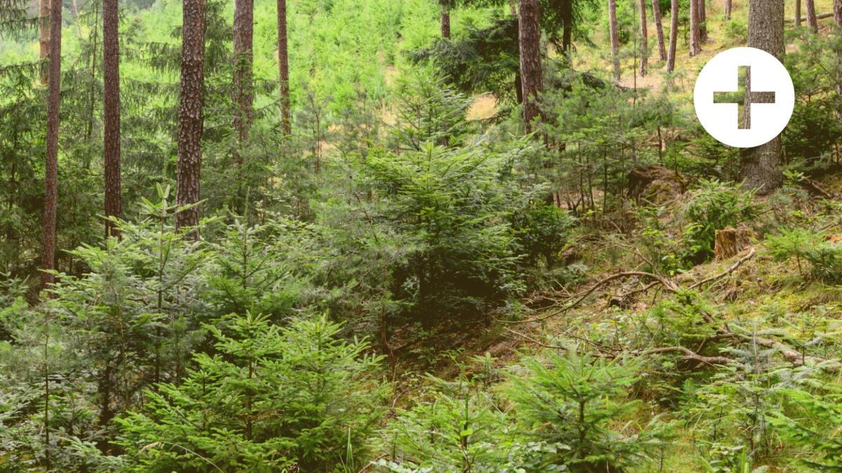 Eine Wald-Erkundung mit bösen Überraschungen