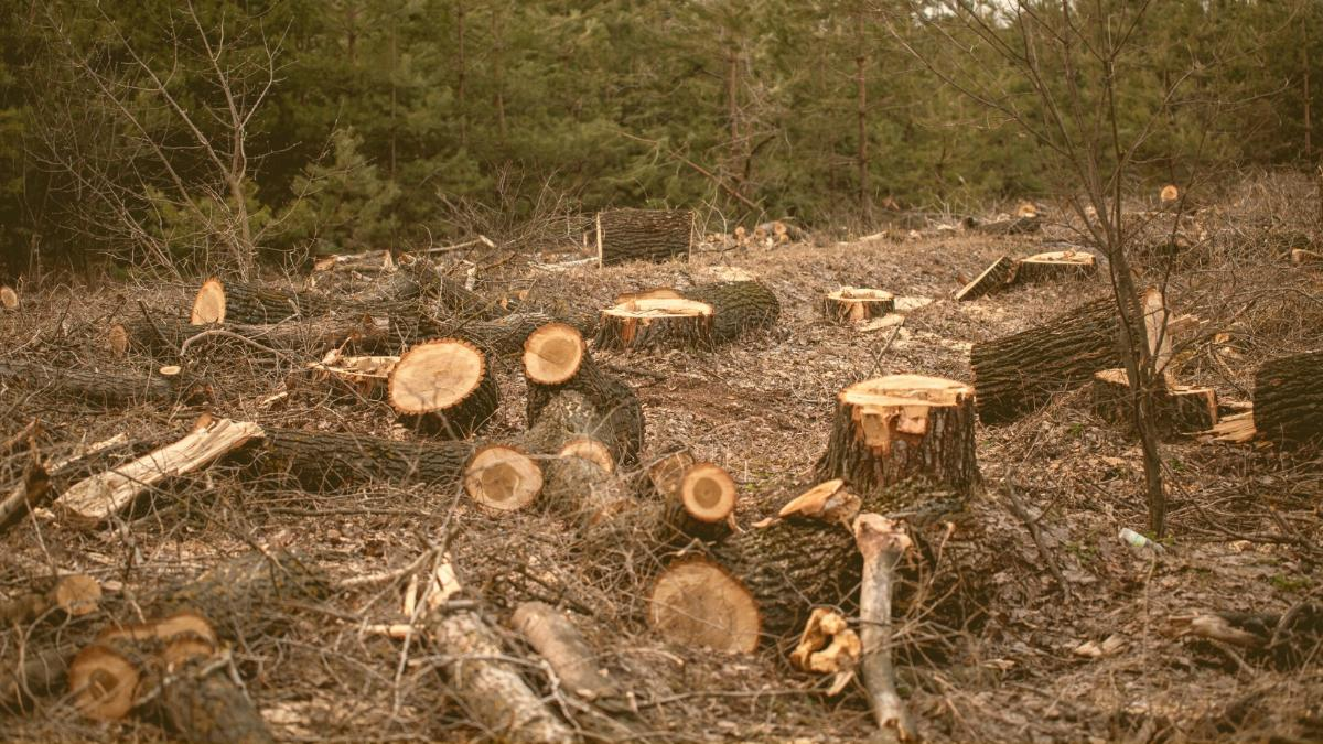 Die Lüge mit den Labels: Das große Geschäft mit illegalem Holz