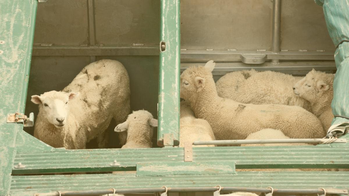 """Waitz: """"Selbst wenn die Hälfte der Tiere stirbt, ist es immer noch ein Geschäft"""""""