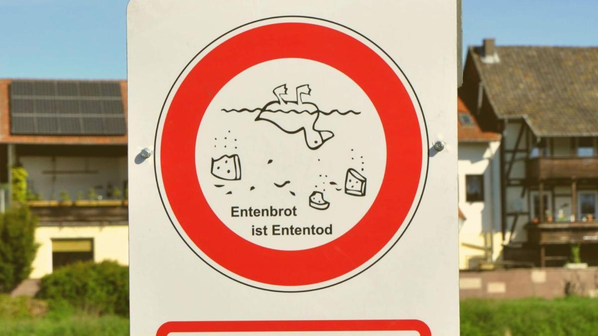 """""""Entenbrot ist Ententod"""": Deswegen bitte Enten niemals mit Brot füttern!"""