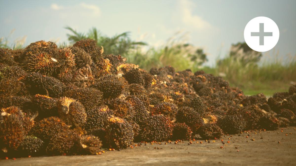 Zertifizierte Zerstörung: Wieso Gütesiegel-Palmöl reines Greenwashing ist