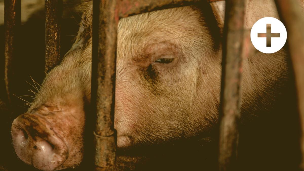 """""""Es darf keine öffentlichen Gelder mehr für Ställe geben, die kein Tierwohl ermöglichen"""""""