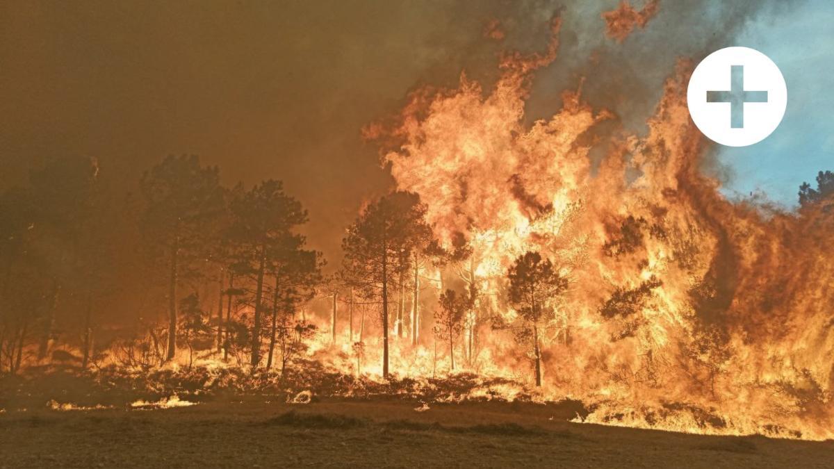 """""""Ein Pulverfass"""": Die vielen Gründe, wieso Waldbrände im Süden immer intensiver werden"""