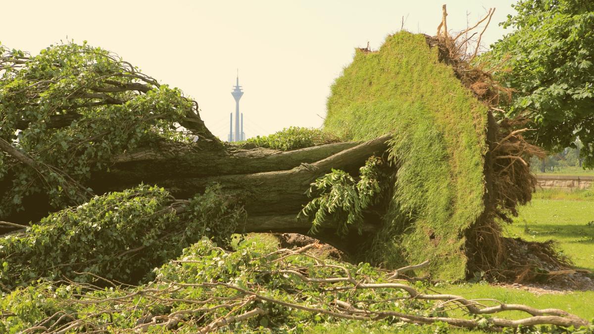 Warnung vor Aufenthalt im Freien: Hier in Deutschland besteht eine Orkan-Warnung