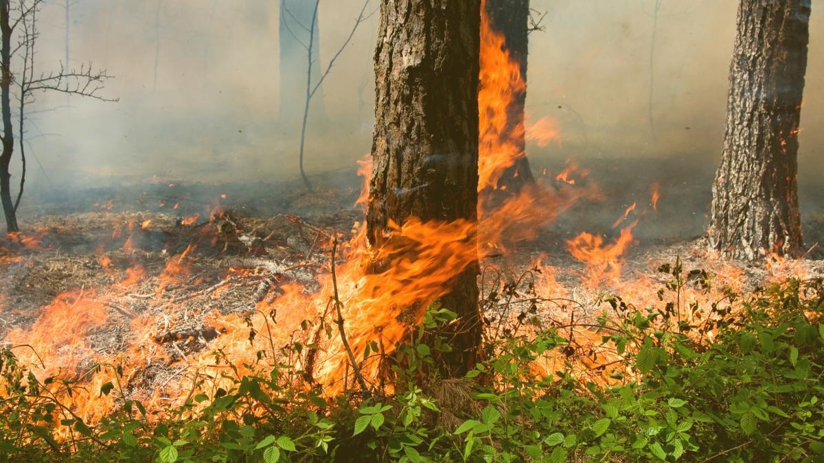 Brände in Italien & Türkei: In diesen Regionen herrscht Ausnahmezustand