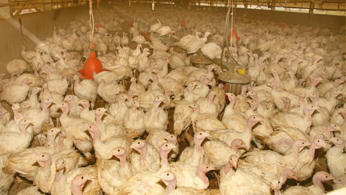 Experten warnen: 30.000 Kilo Antibiotika landen in Österreich in Fleischerzeugung