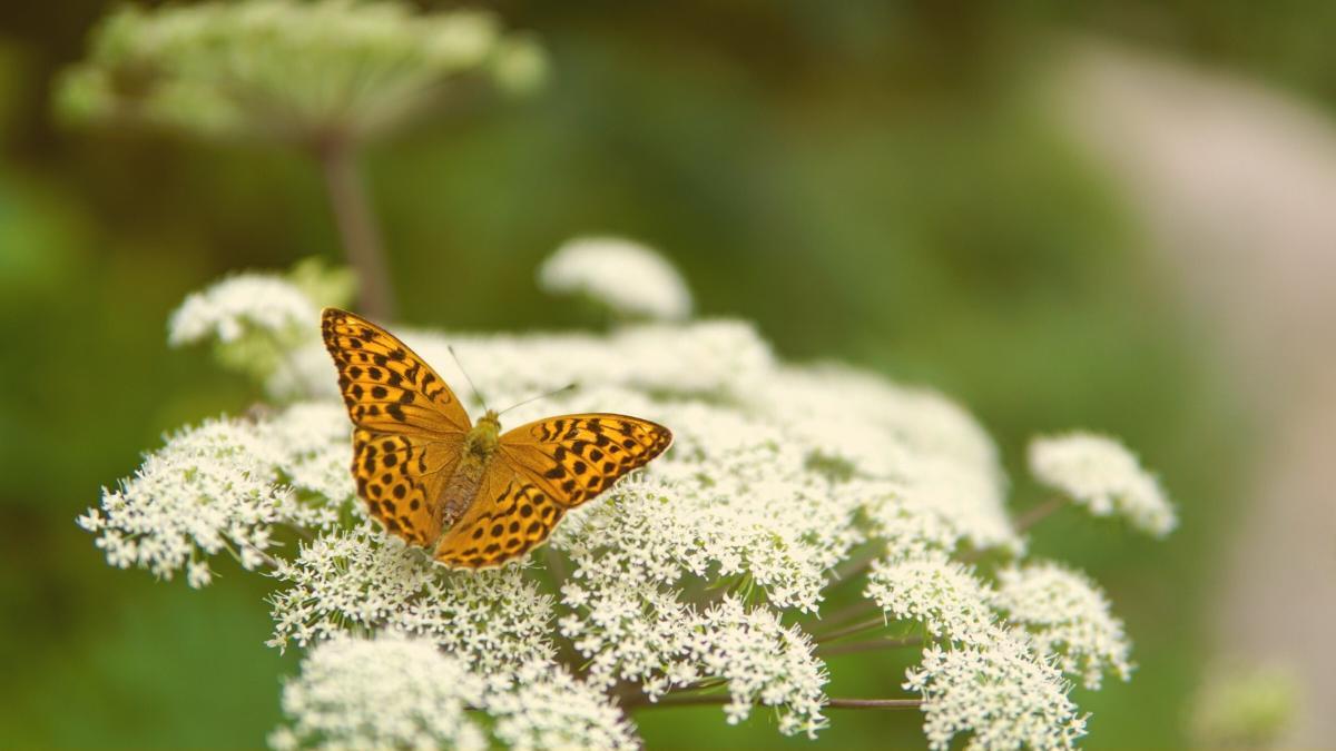 Experten schlagen Alarm: 39 Prozent aller Tierarten in Österreich gefährdet