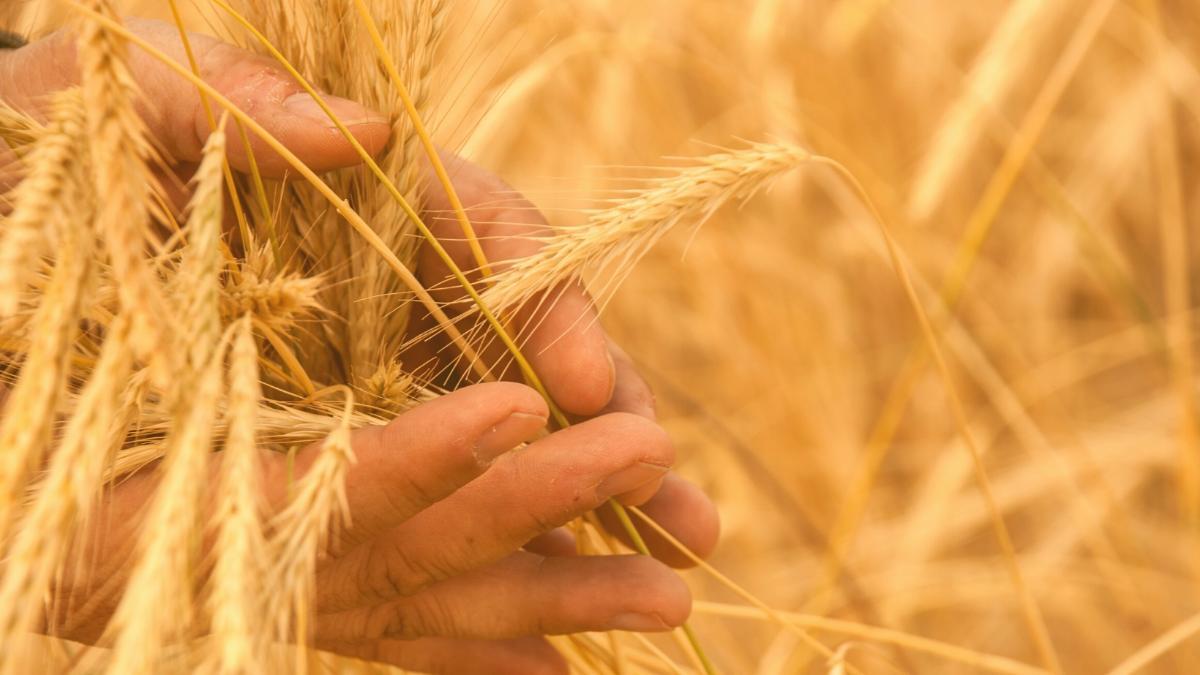 Entlarvt: Wie die Landwirtschaftsministerin unsere Bauern in Brüssel verrät