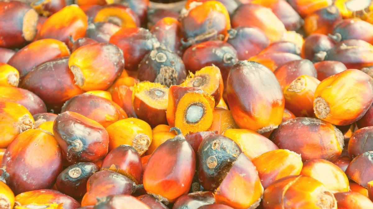 """Nachgefragt: Deswegen setzt """"The Vegetarian Butcher"""" so stark auf Palmöl"""