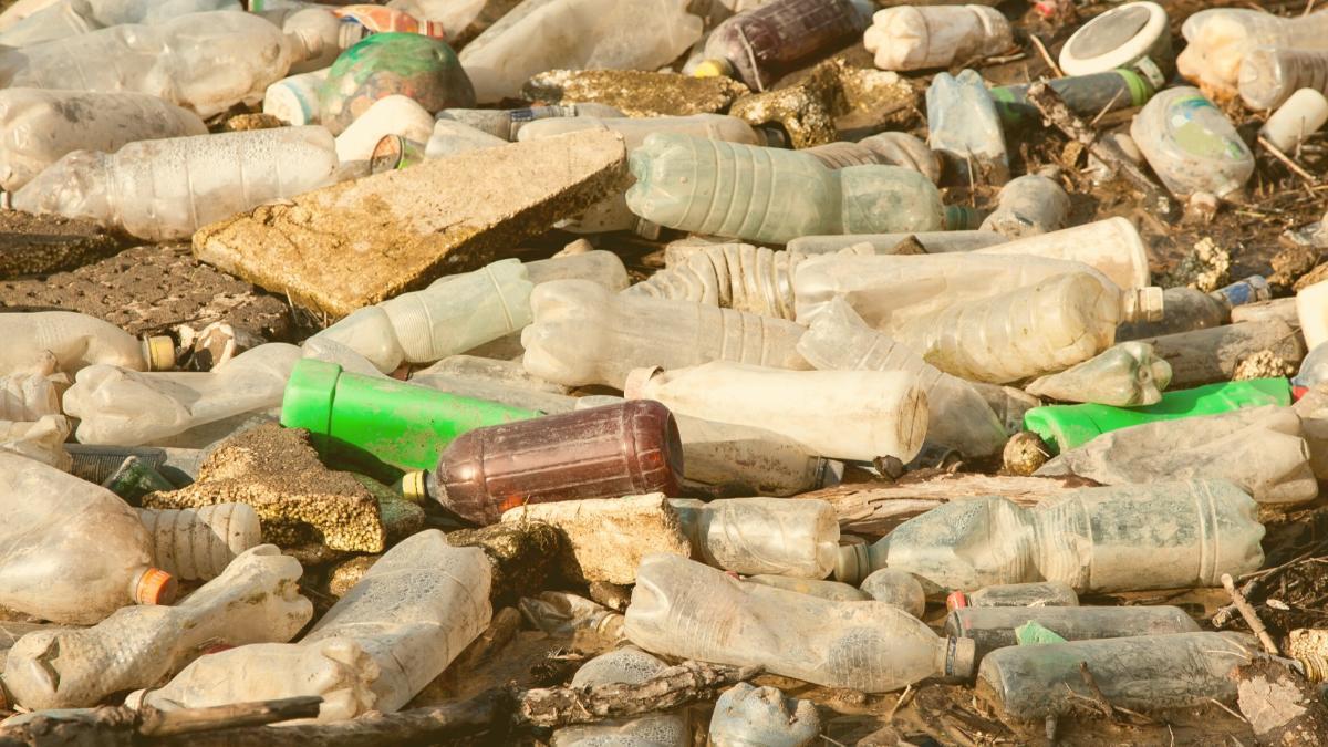 Kritik: Investitionen in Naturzerstörung konterkarieren Artenschutz
