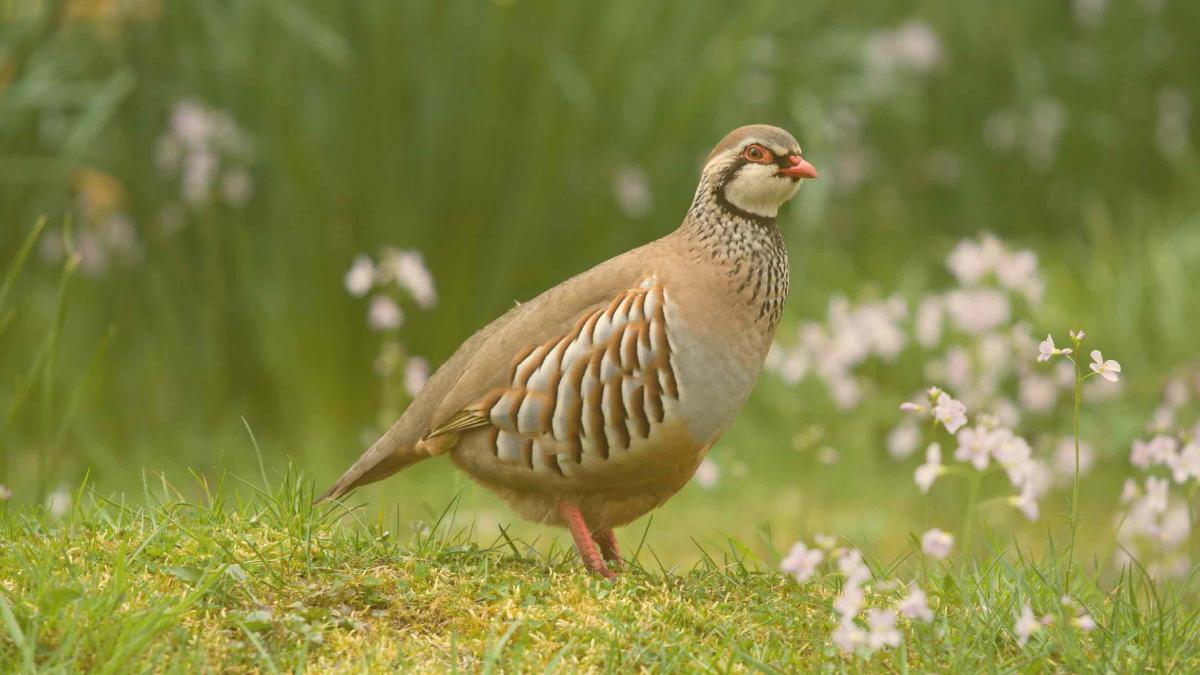 Stilles Massensterben: Bereits 40 Prozent weniger Vögel