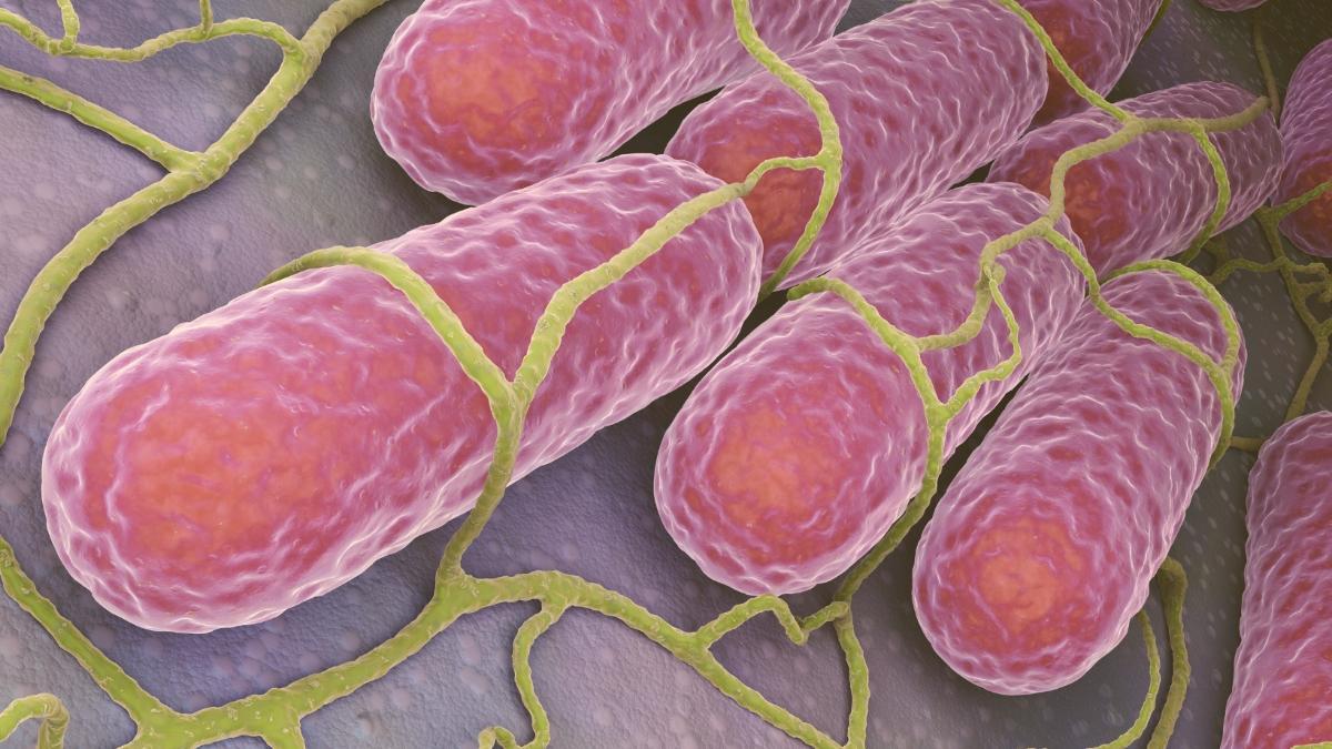 Salmonellen-Alarm bei HOFER: Diese Produkte gefährden die Gesundheit