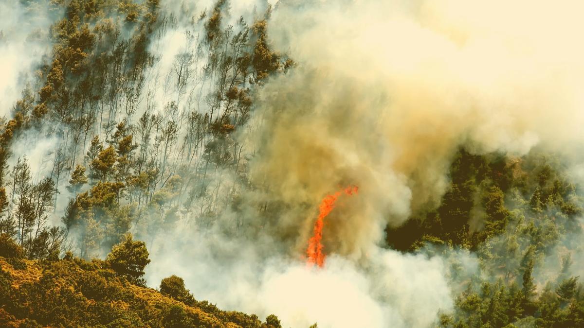 Italien, Türkei & Griechenland: Hier geraten die Brände nun völlig außer Kontrolle