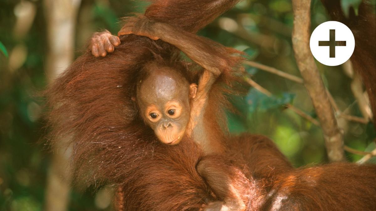 Fake-Gütesiegel: So schaden konzernnahe NGOs dem Tier- und Umweltschutz