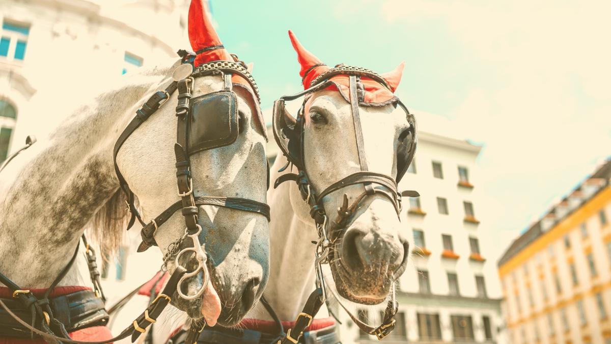 """Fast 36 Grad und pralle Sonne: """"Arme Pferde werden regelrecht gebacken"""""""
