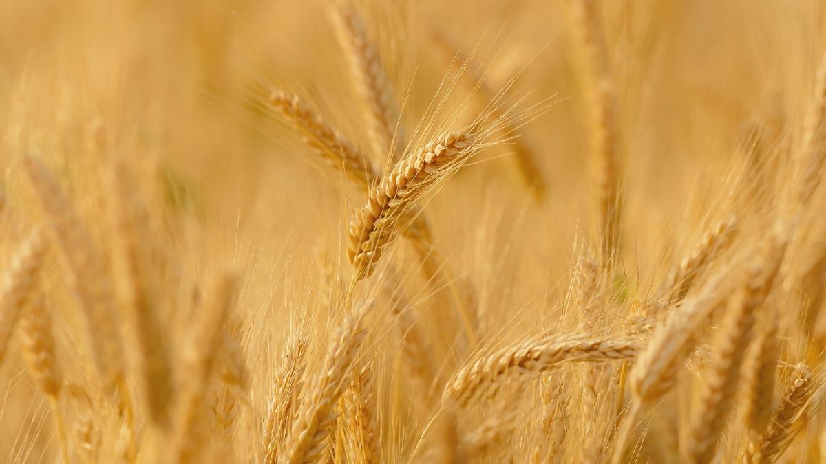 500.000 Landwirte erheben sich zum Protest gegen die Regierung