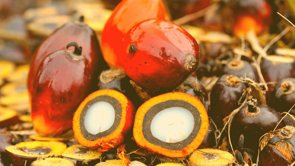 Kein Palmöl im Biodiesel mehr: Österreich wird zum Vorreiter
