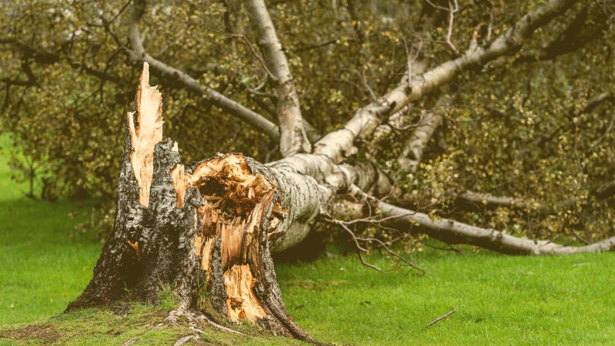 Überflutungen, Hagel & Sturmböen: Hier gilt jetzt höchste Warnstufe