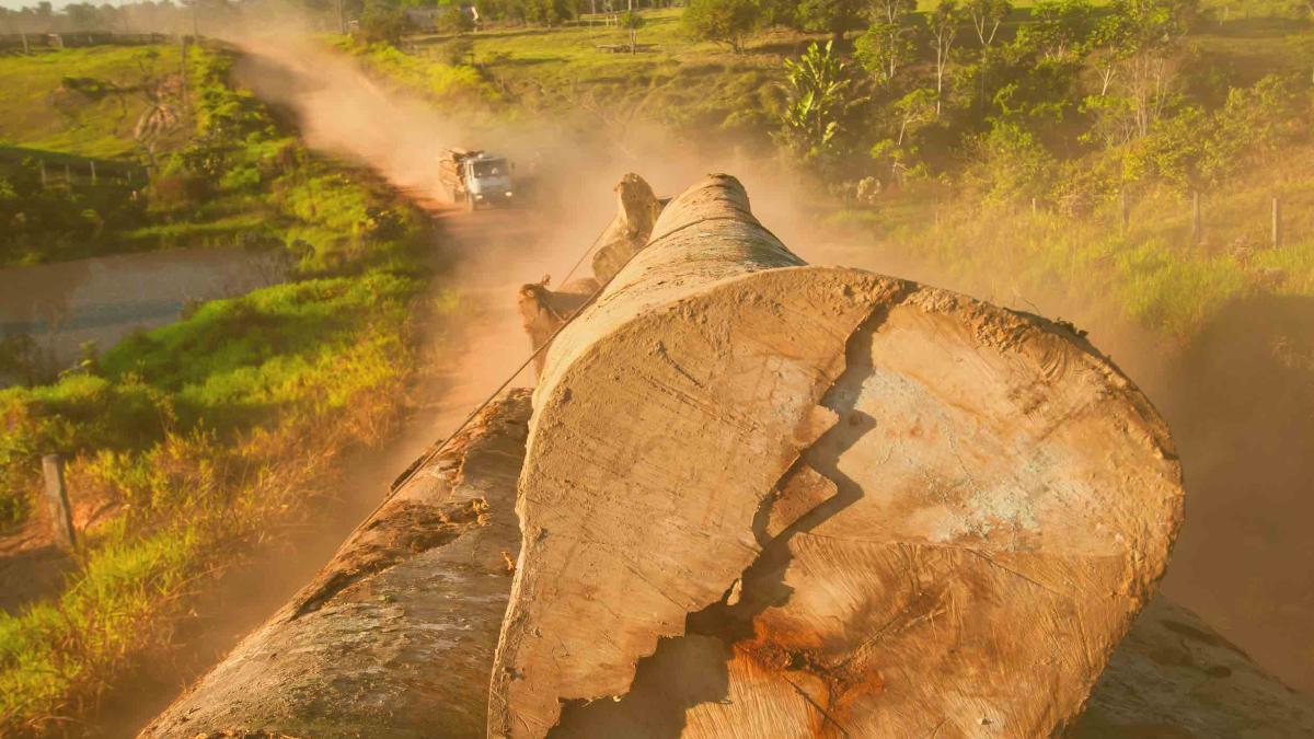 """Absolute Katastrophe"": Brasilien stoppt illegale Regenwald-Rodungen erst 2030"