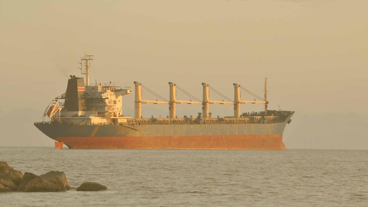 Erfolg für Tierschutz: Neuseeland verbietet Tiertransporte per Schiff