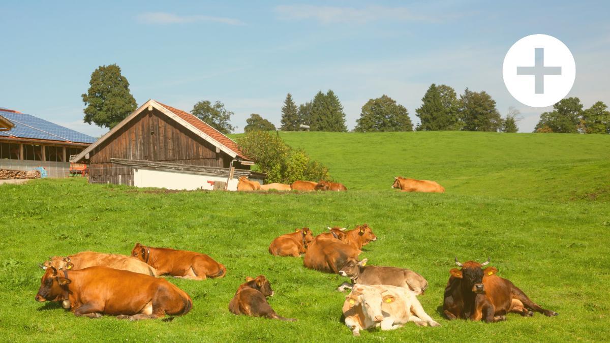 50 Prozent weniger Bauern: Niedergang der kleinbäuerlichen Landwirtschaft
