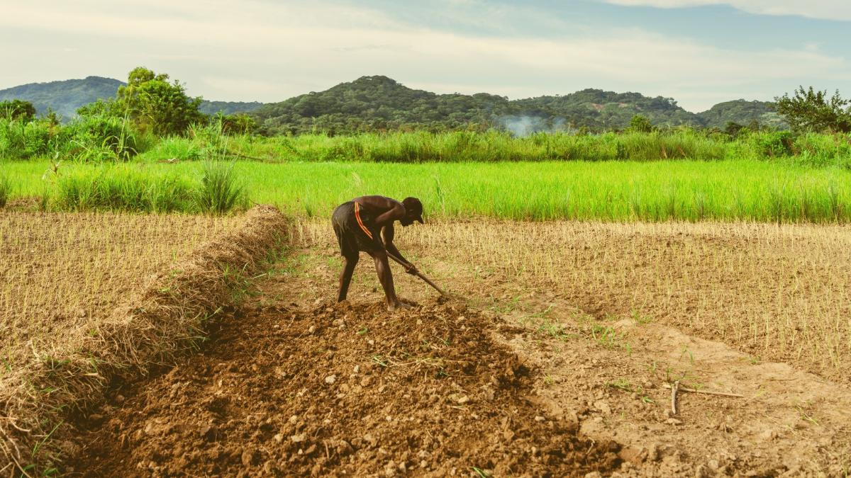 Wie die Gates-Stiftung afrikanische Bauern in Abhängigkeit & Armut treibt