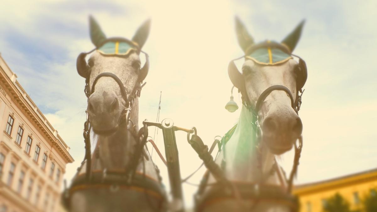 Unfälle & Tierleid: Wann werden die Fiaker-Pferde aus den Innenstädten befreit?