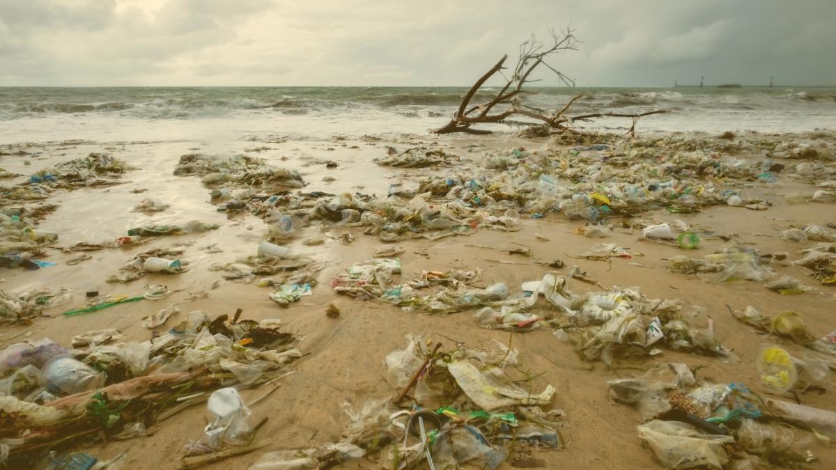 Neue Studie: Nur noch 3 Prozent der Welt ökologisch völlig intakt