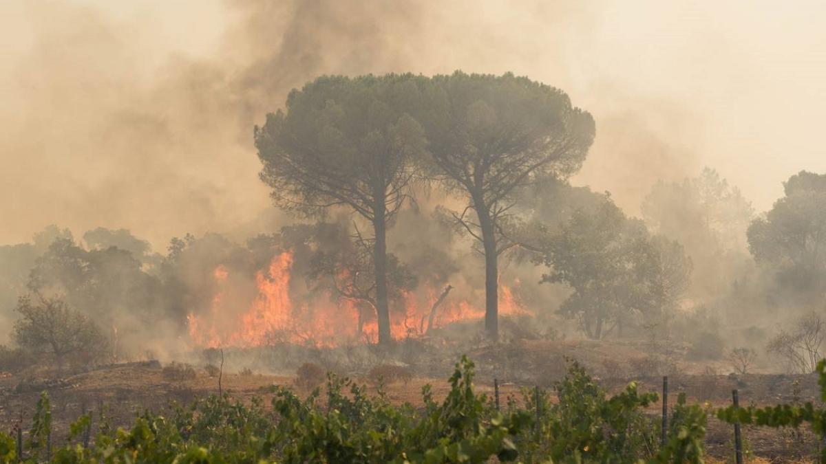 Bereits 7 Tote: So schlimm wüten die Brände nun in Italien und Frankreich